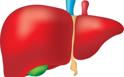 The Importance of Bile for Removing Toxins